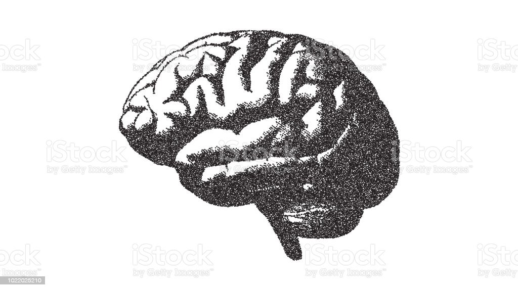 Brain Illustration With Stipple Drawing Style On White Bg