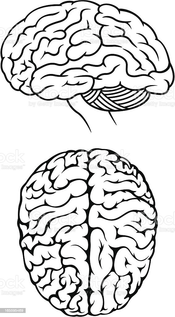 Brain Illustrations vector art illustration