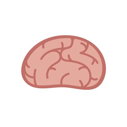 Brain in flat vector cartoon style.