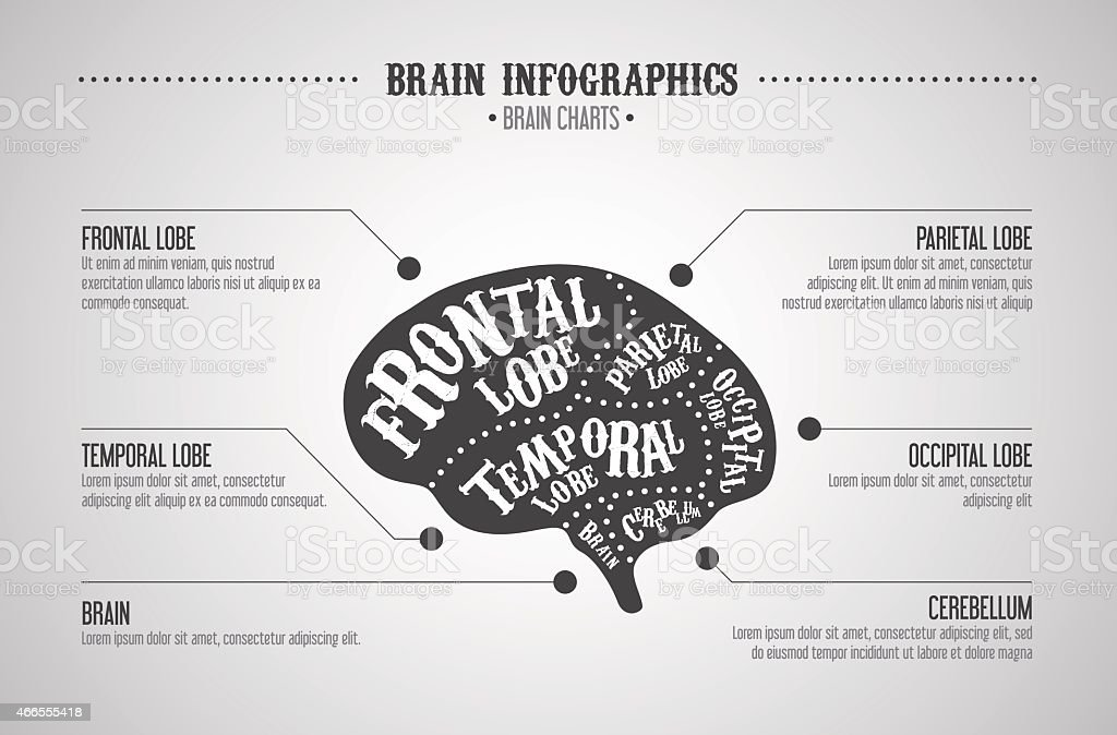 Ilustración de Cerebro Infografías Concepto Vector Cerebro Cortes ...