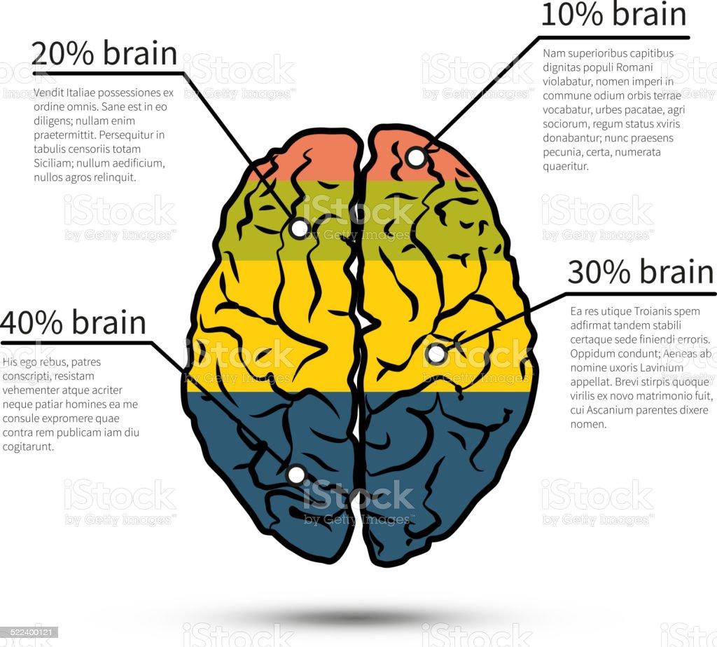 Cerebro Infografía Diseño Plantilla De Diseño De Diseño De Flujo De ...