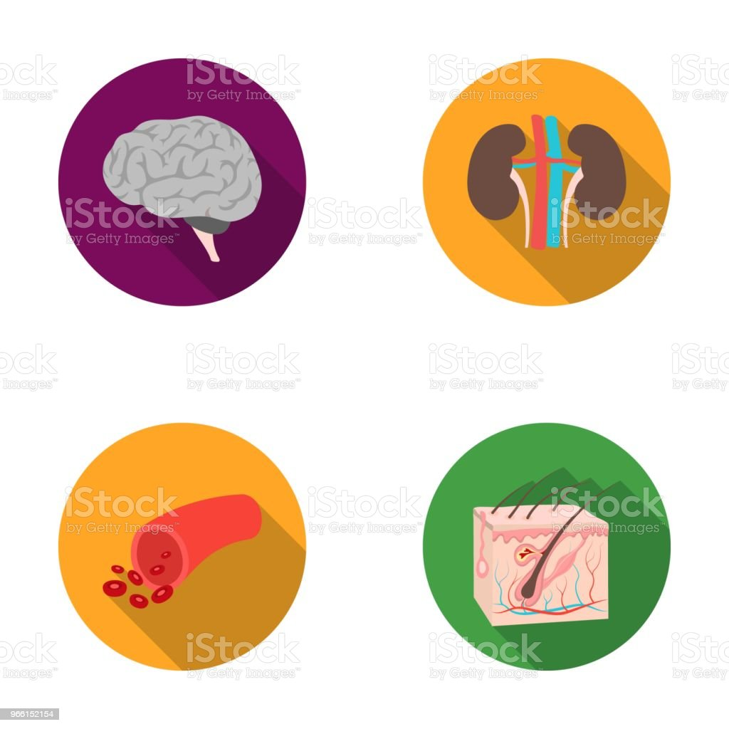 Brain, kidney, blood vessel, skin. Organs set collection icons in flat style vector symbol stock illustration web. - Royalty-free Conjunto de ícones arte vetorial