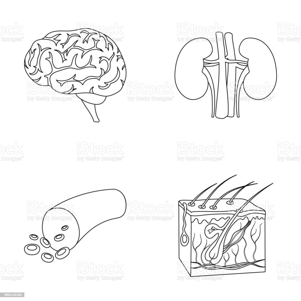 Brain, kidney, blood vessel, skin. Organs set collection icons in outline style vector symbol stock illustration web. brain kidney blood vessel skin organs set collection icons in outline style vector symbol stock illustration web - stockowe grafiki wektorowe i więcej obrazów choroba royalty-free
