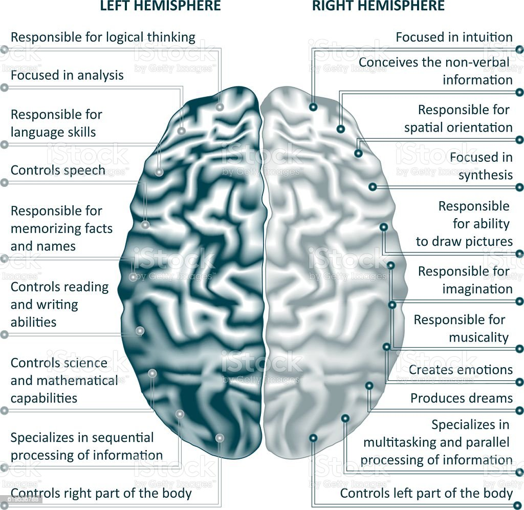 Brain Left And Right Hemispheres Infographics Vector Illustration