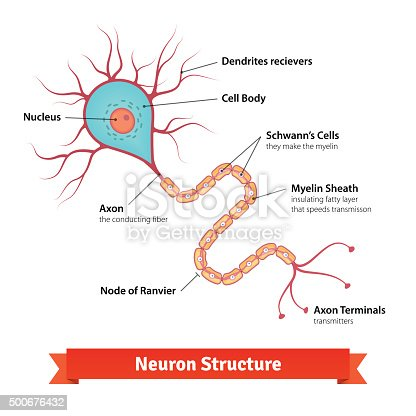 Brain Neuron Cell Diagram stock vector art 500676432 | iStock