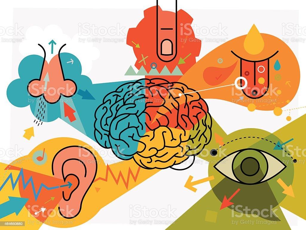 Brain Parts And Sensory Perception vector art illustration