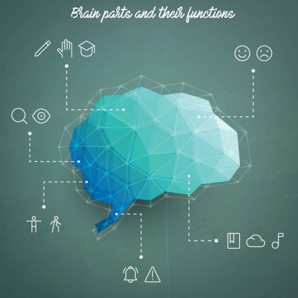 Brain parts and their functions depicted as icons Vector illustration of a low poly human brain on a textured blackboard with some icons showing the function of every part of the brain. temporal lobe stock illustrations