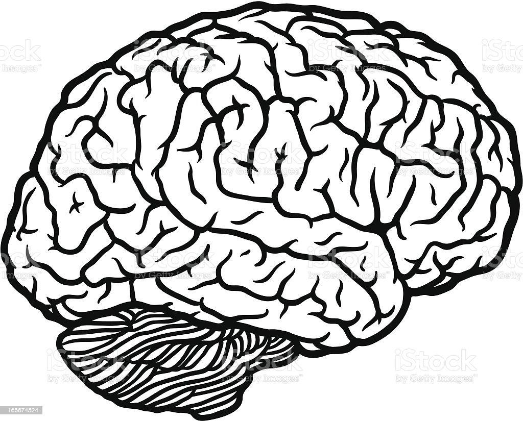brain profile outline royalty-free stock vector art