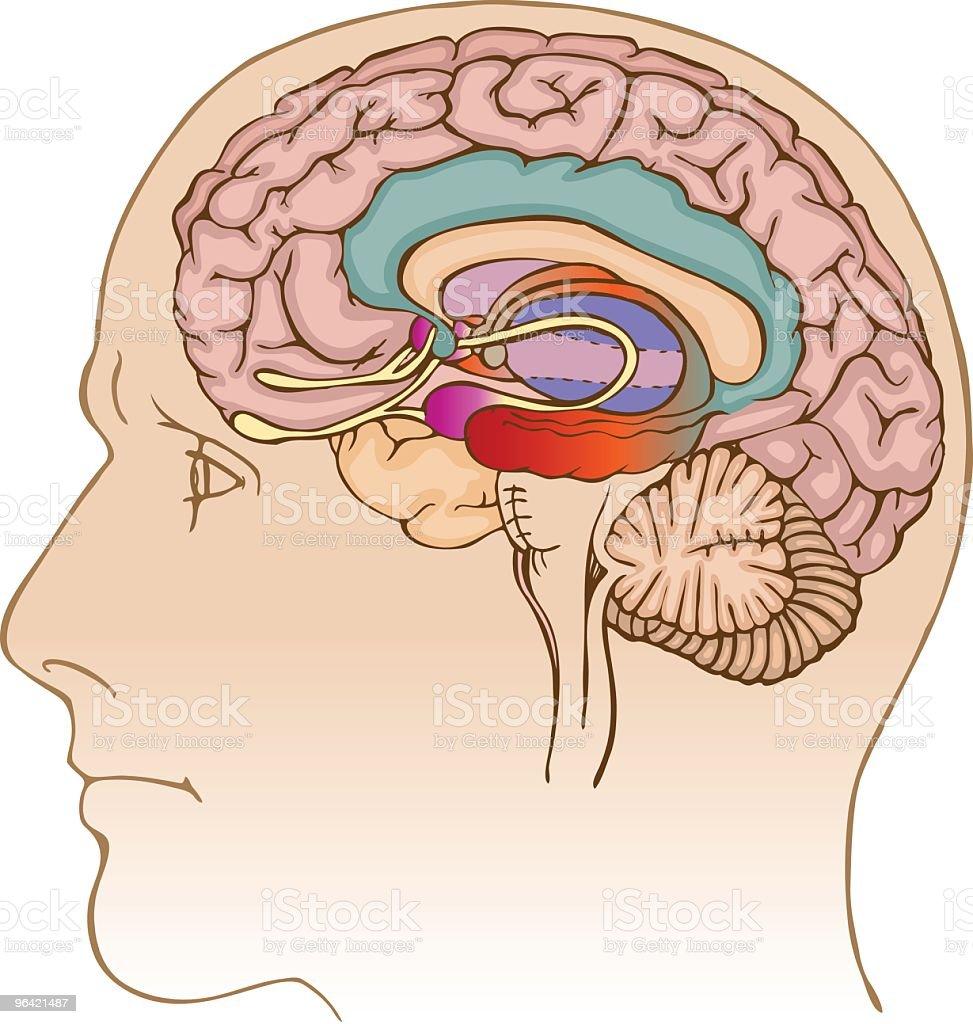 Brain Profile vector art illustration
