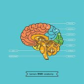 Brain section 1