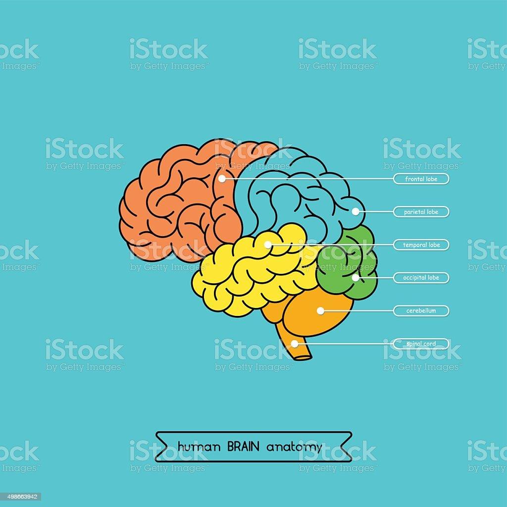Brain side 1 vector art illustration