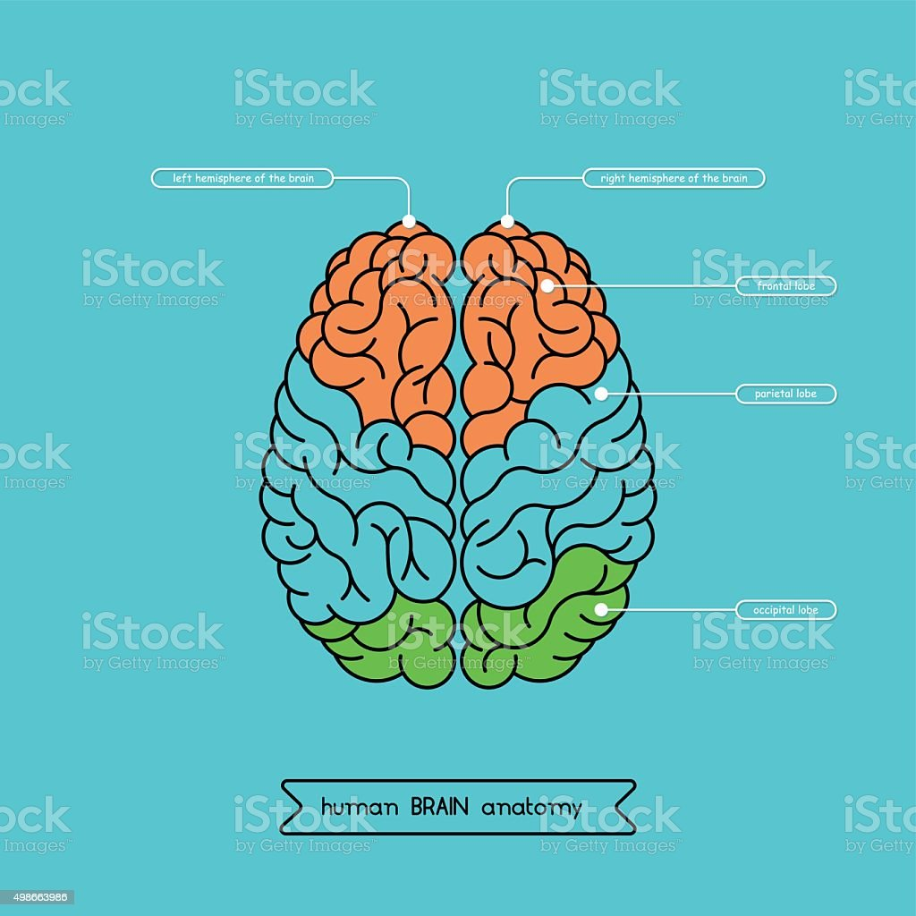 Brain top 1 vector art illustration