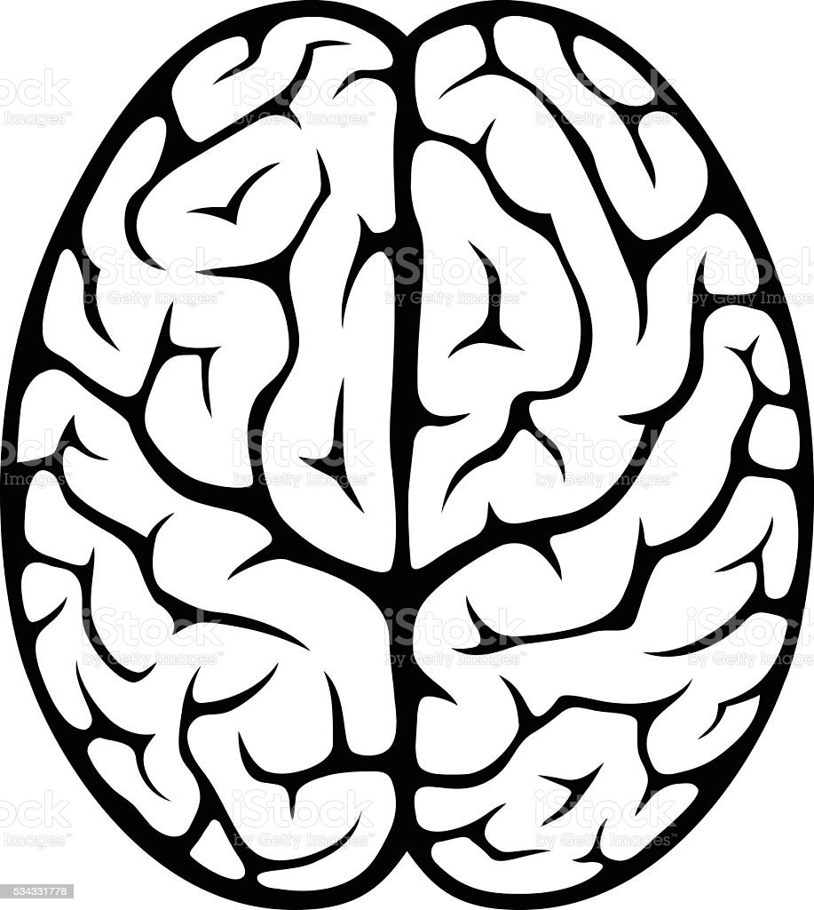 https://media.istockphoto.com/vectors/brain-top-view-vector-id534331778