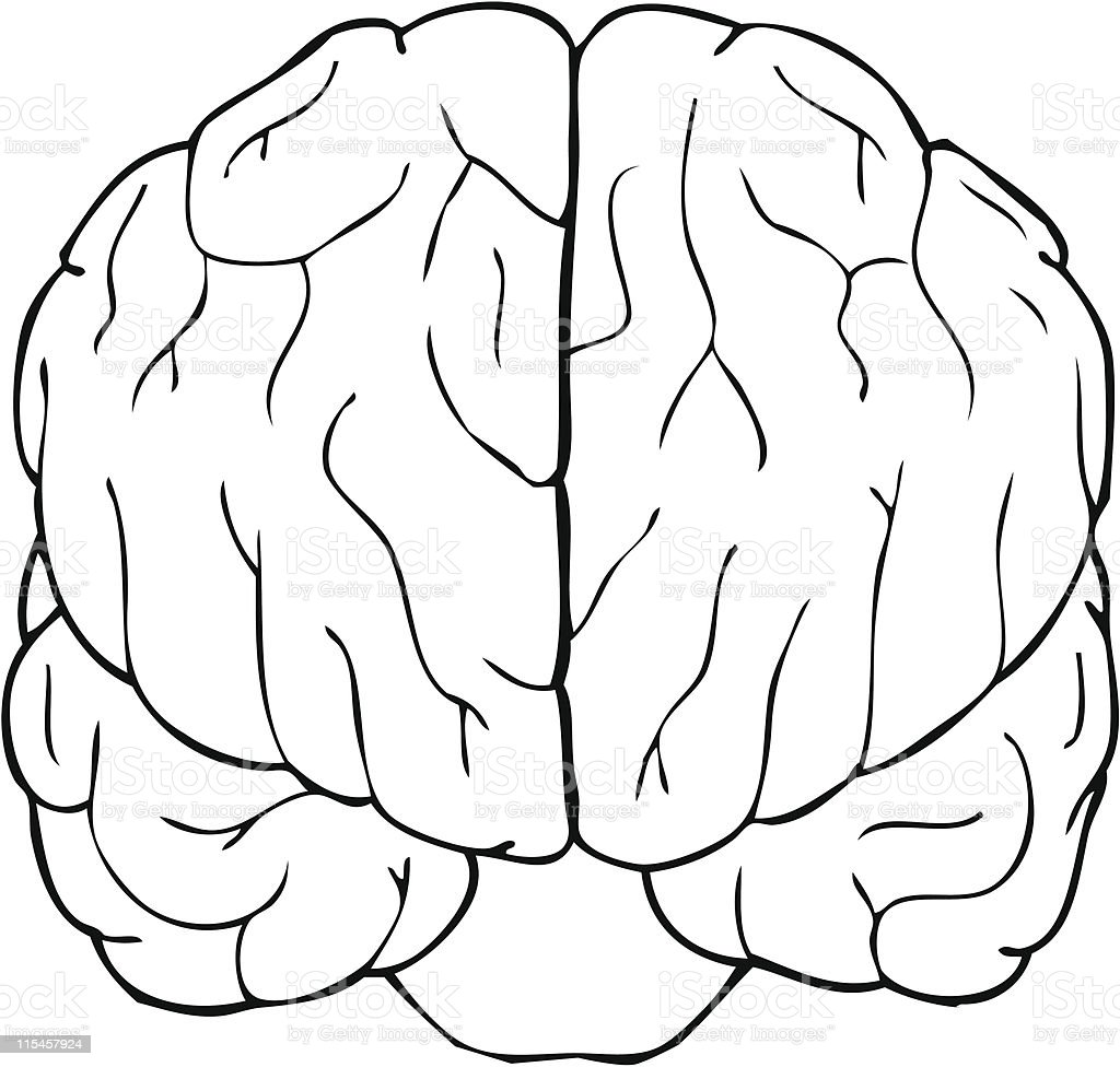 Brain Stock Illustration - Download Image Now - iStock