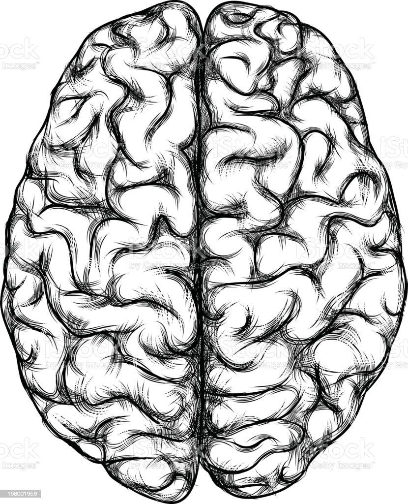 Gehirn – Vektorgrafik