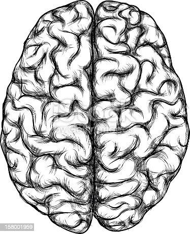 Brain Stock Vector Art & More Images of Brain - iStock