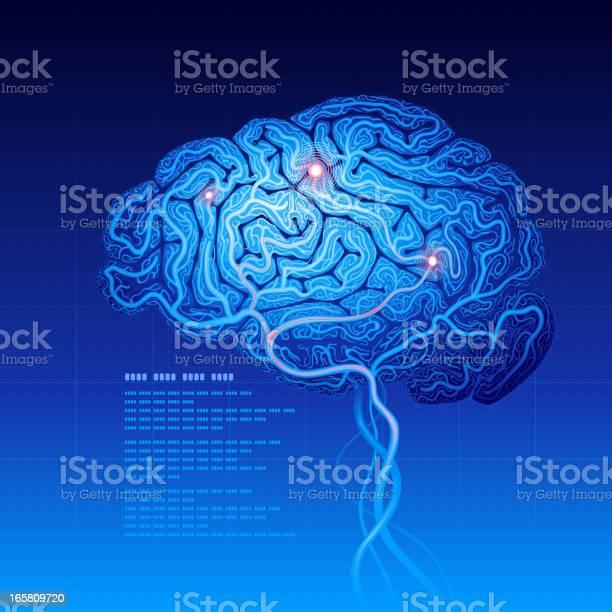 Brain vector id165809720?b=1&k=6&m=165809720&s=612x612&h=roeg8xi7 itvvqxhddc33vk8b3vvlp0yre1okcw8a3a=