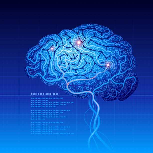 Brain Abstract science background with brain. neurotransmitter stock illustrations