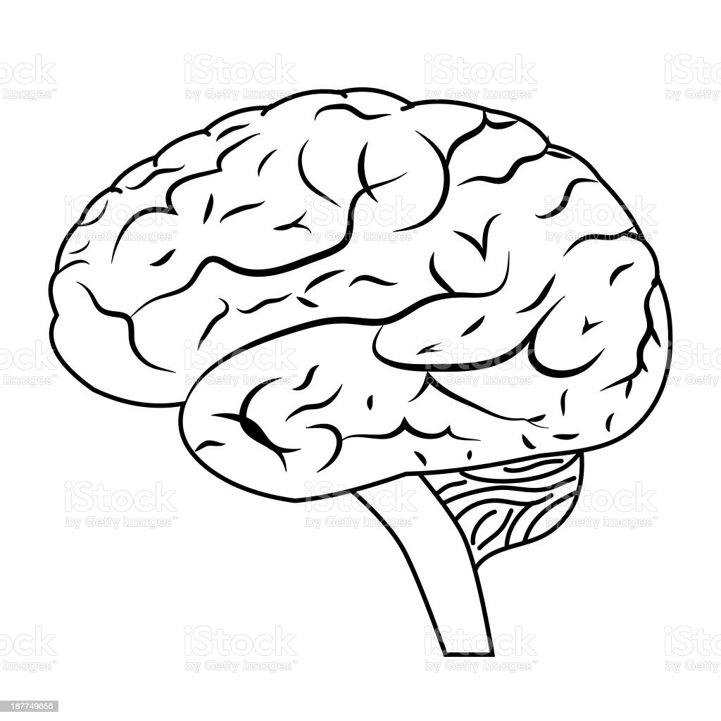 Brain. royalty-free stock vector art