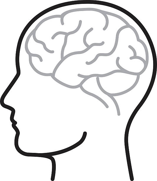Brain Line art illustration of a human brain. human head stock illustrations