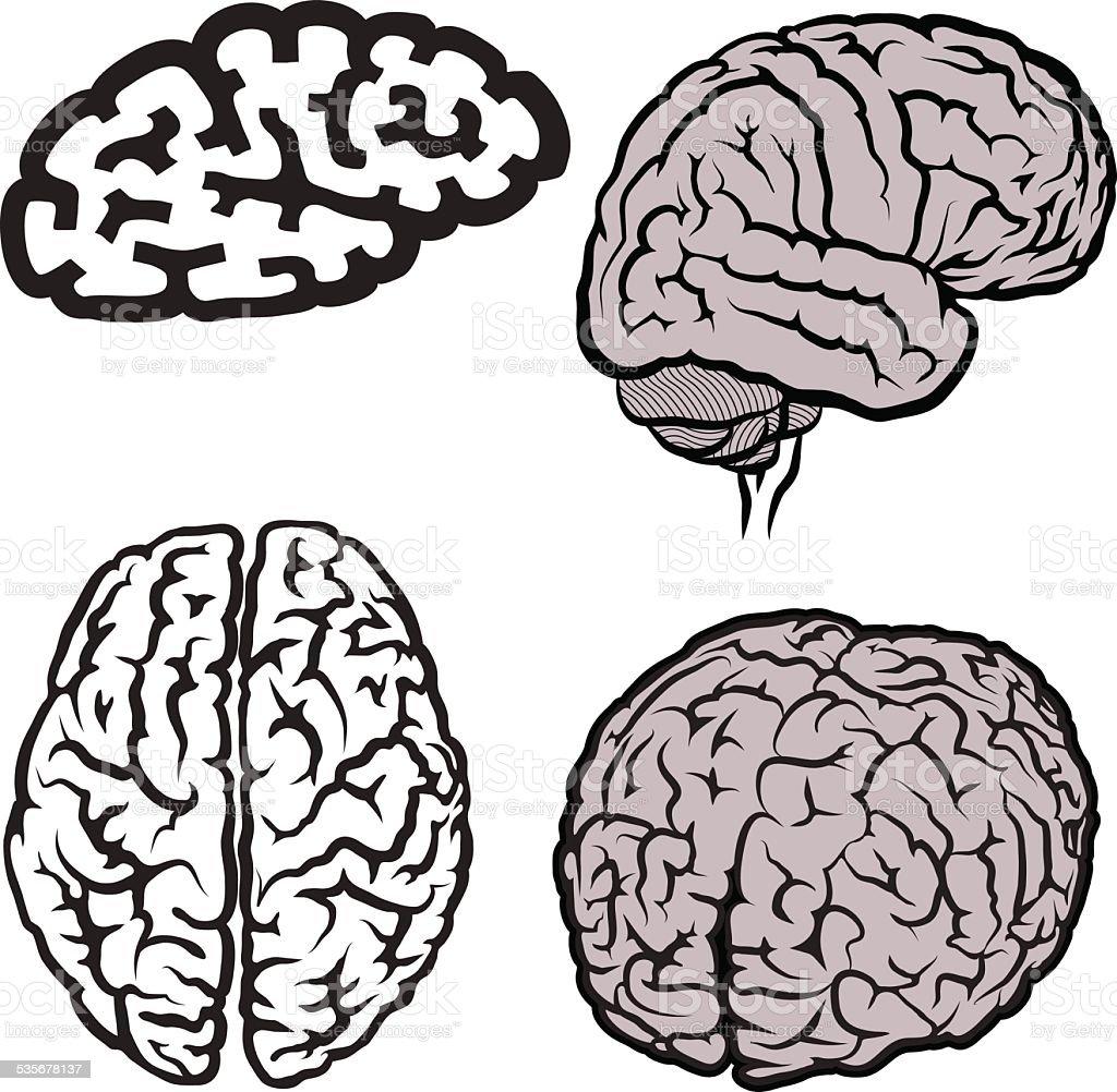 Cervello - illustrazione arte vettoriale