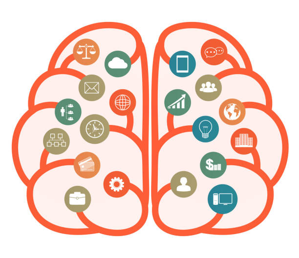 Simple Brain Diagram Clip Art Illustrations, Royalty-Free