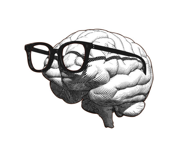 Brain with glasses drawing illustration isolated on white BG Monochrome retro engraving human brain with old retro glasses illustration in side view isolated on white background brain stock illustrations