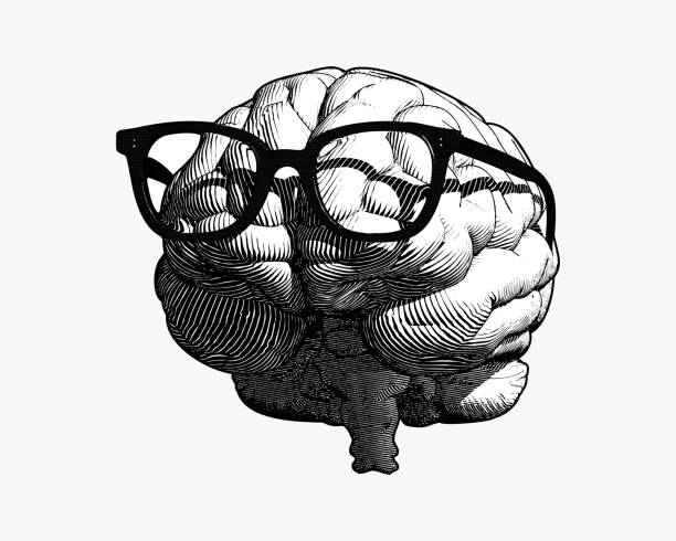 Brain with glasses drawing illustration isolated on white BG monochrome retro engraving human brain with black old glasses illustration in front view isolated on white background occipital lobe stock illustrations