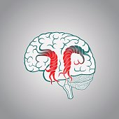 Brain with the twisted convolutions, of the destruction of the brain, stroke, memory