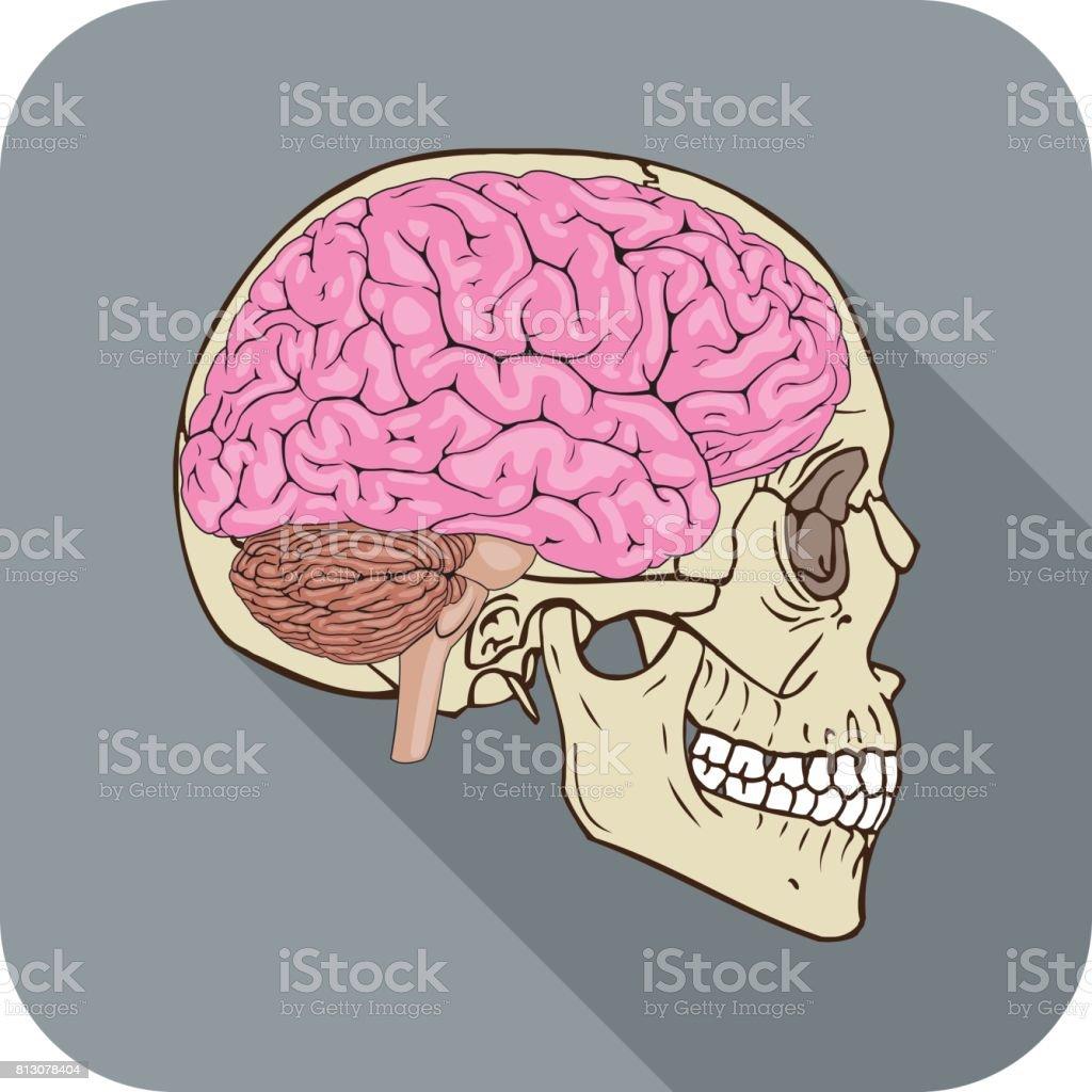 Brainiac Icono Gris - Arte vectorial de stock y más imágenes de ...