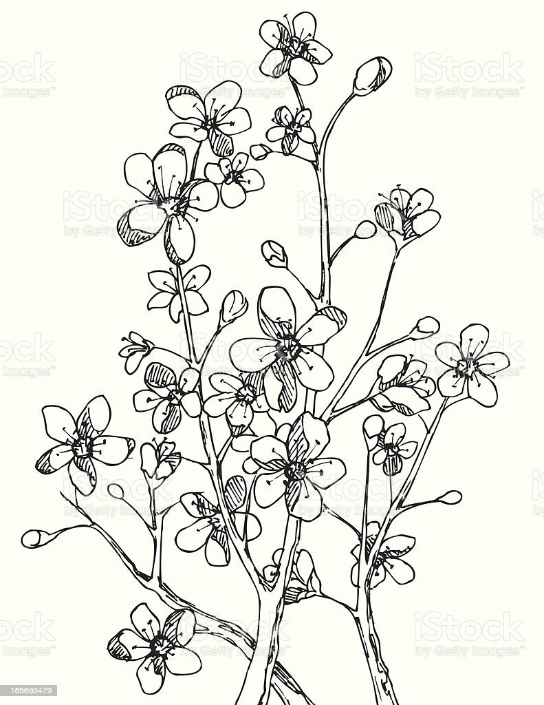 Branch Blossom in Black and White royalty-free stock vector art