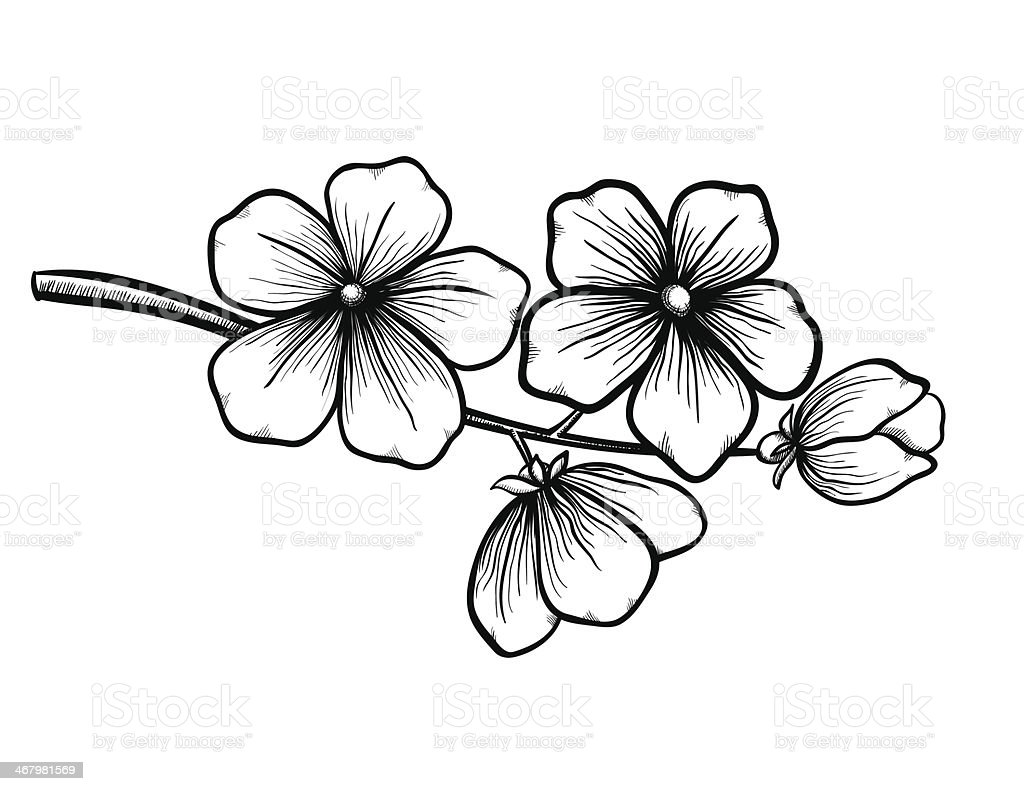 branch of a blossoming tree in graphic black white style, vector art illustration