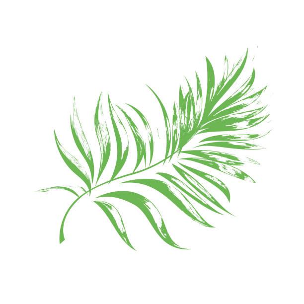 Zweig einer tropischen Palme. – Vektorgrafik