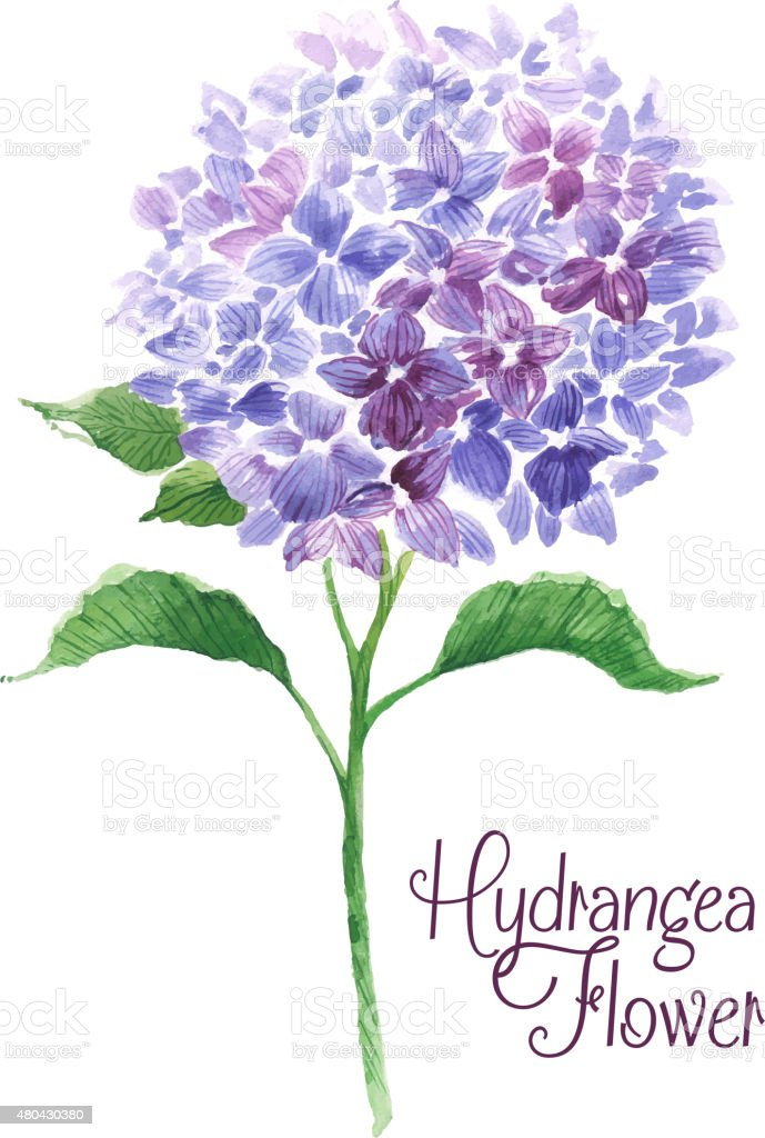 Branch of blue hydrangea vector art illustration