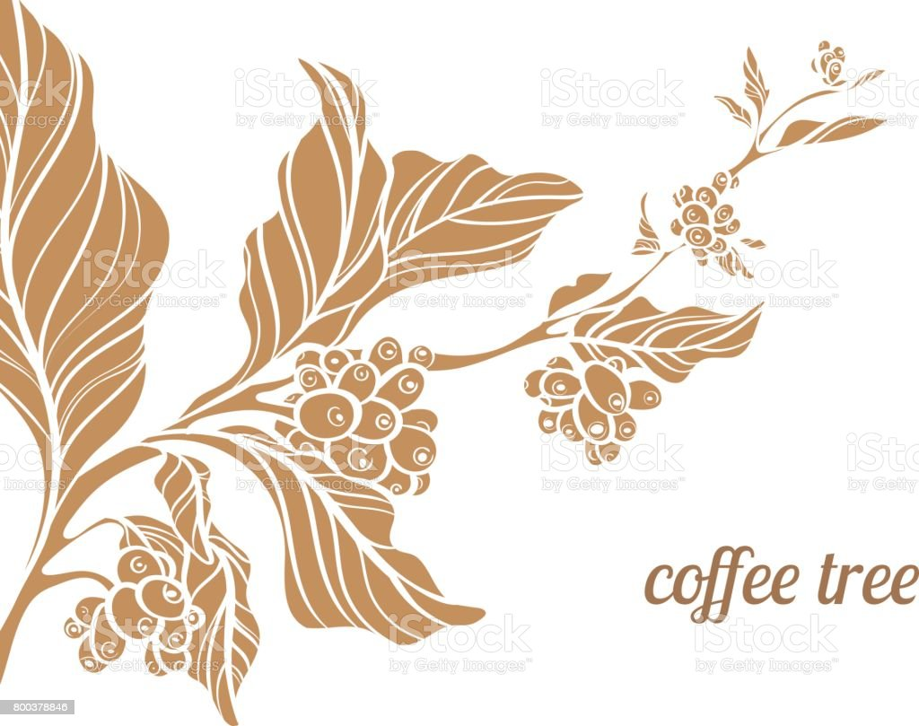 Branch Of Coffee Tree Vector Illustration Stock ...