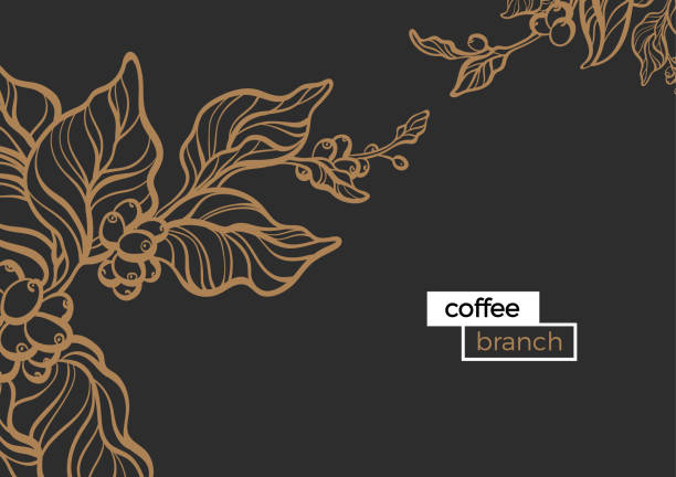 Branch of coffee. Vector template Template with gold branch of coffee tree, leaves and natural coffee beans Realistic organic product Silhouette, organic shape Botanical illustration. Vector design isolated on black background eps.10 cafe stock illustrations