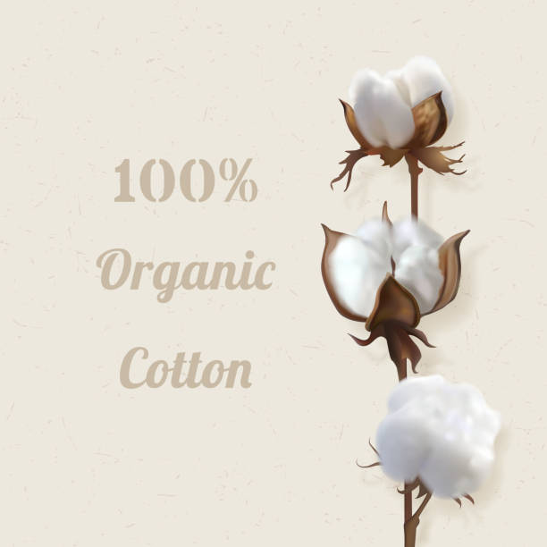 branch of cotton plant in flower Beautiful photo realistic vector illustration with branch of cotton on a beige background and hundred percent natural cotton inscription. Perfect for wallpapers, web page backgrounds, surface textile cotton stock illustrations