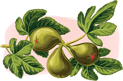 branch of figs