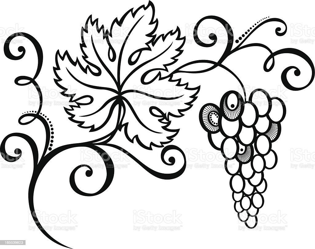 Branch of Grapes vector art illustration