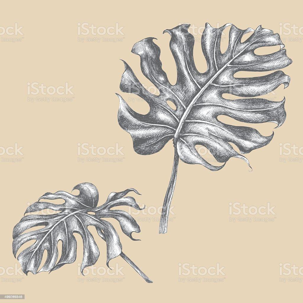 Rama de monstera con hojas. - ilustración de arte vectorial