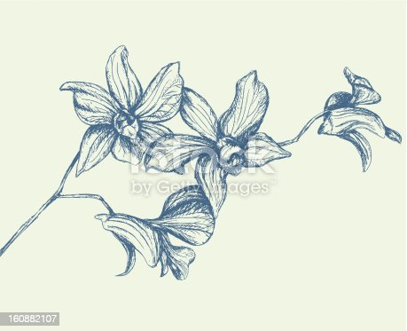 Hand-drawn branch of orchids.