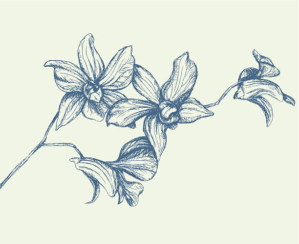 Branch of Orchids Hand-drawn branch of orchids. orchid stock illustrations