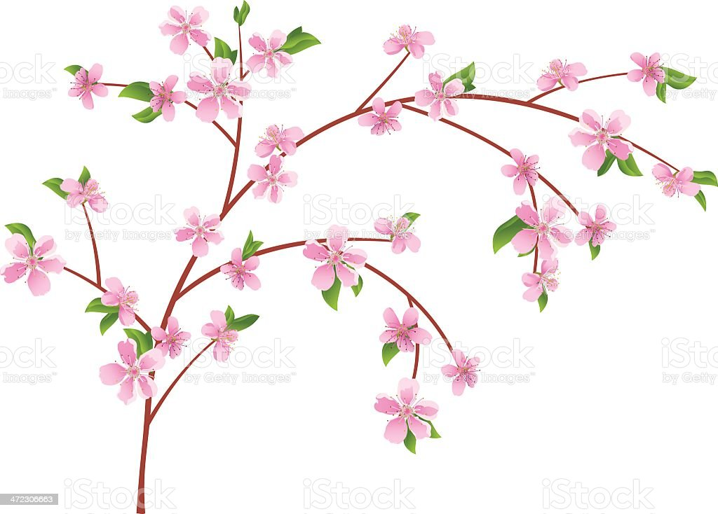 branch of peach with blooming flowers vector art illustration