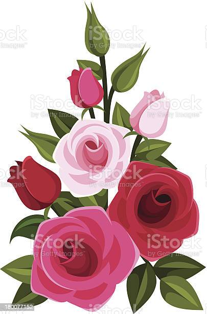 Branch of red and pink roses vector illustration vector id180077152?b=1&k=6&m=180077152&s=612x612&h=xol2j9jd1mgpdo qesbfaf5myxguk koajiat1zw3pi=
