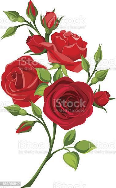 Branch of red roses vector illustration vector id639260542?b=1&k=6&m=639260542&s=612x612&h=lbamefgnesqjtpg6ijeyehivlwz krut4bxb03kxfee=