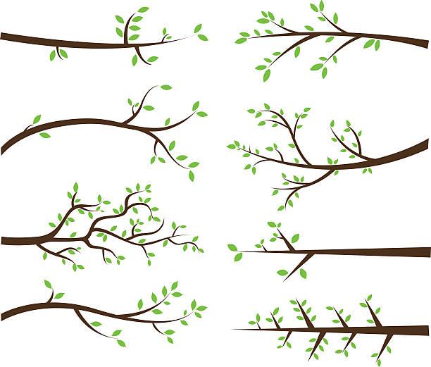 oddział sylwetki elementy - gałąź część rośliny stock illustrations