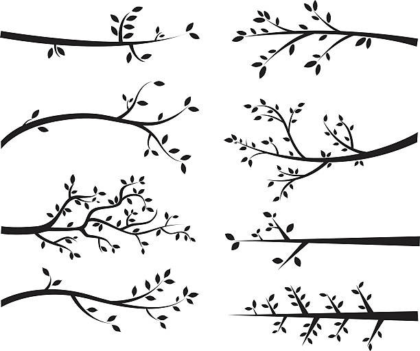 Branch Silhouettes The vector for Branch Silhouettes branch plant part stock illustrations