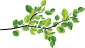 istock branch 162543554