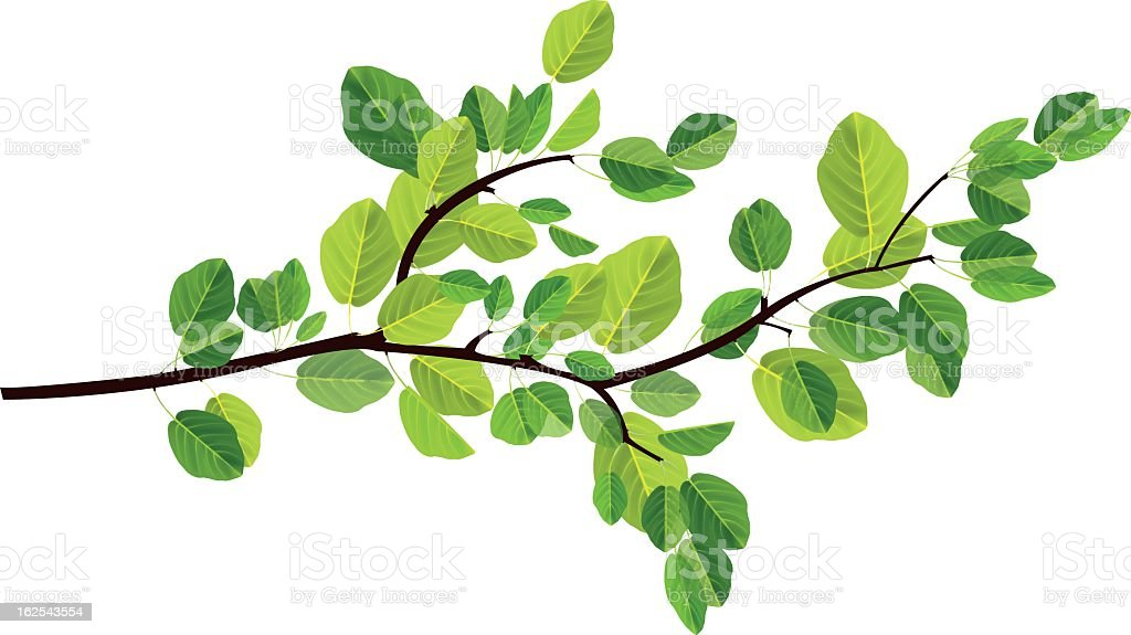 branch vector art illustration