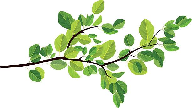 gałąź - gałąź część rośliny stock illustrations
